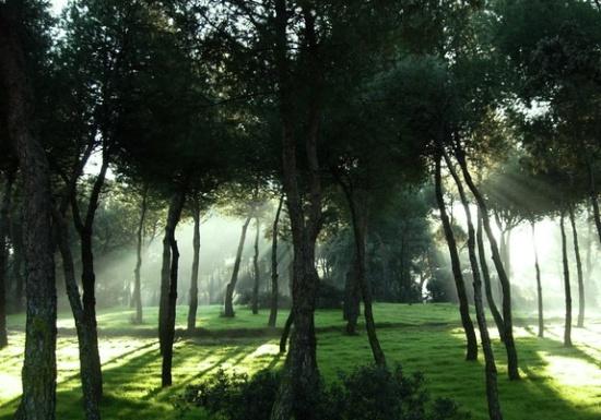 утро в Парке Каса де Кампо