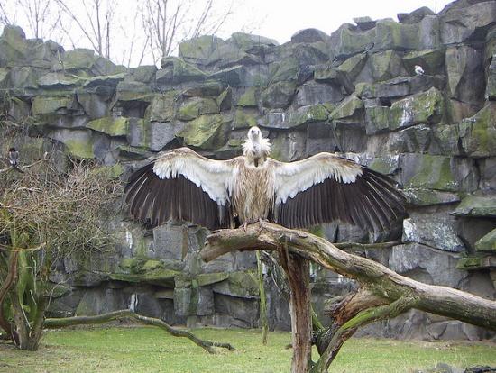 редкие птицы в Зоопарке Фридрихсфельде