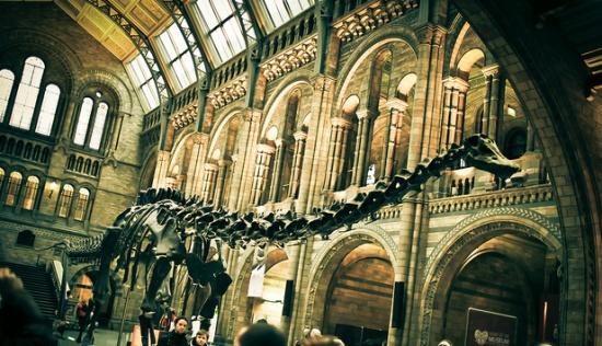 скелет диплодока - Музей естествознания в Лондоне