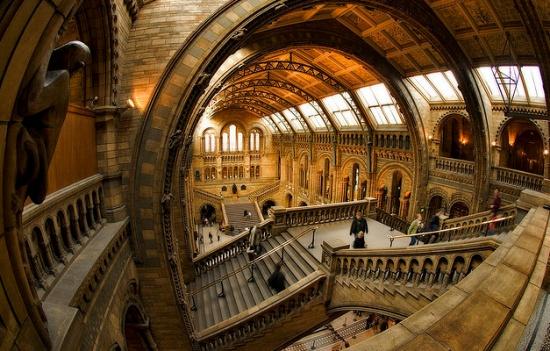 внутри музея естествознания в Лондоне