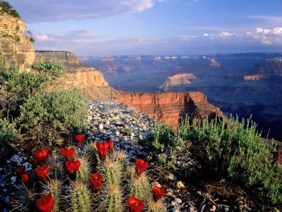 Природа Гранд-Каньона