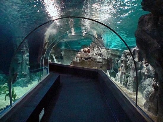Стеклянный туннель в океанариуме Адлера