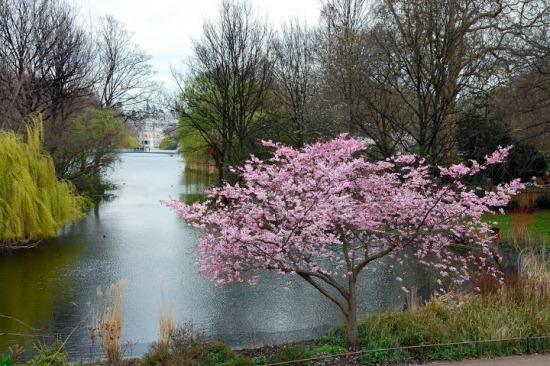 Сент-Джеймсский парк весной